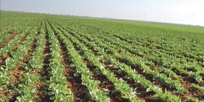 Agriculture: OCP et CAM s'allient pour faciliter le financement