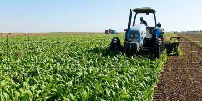 Saison agricole: 1,6 million de qx de semences mobilisé