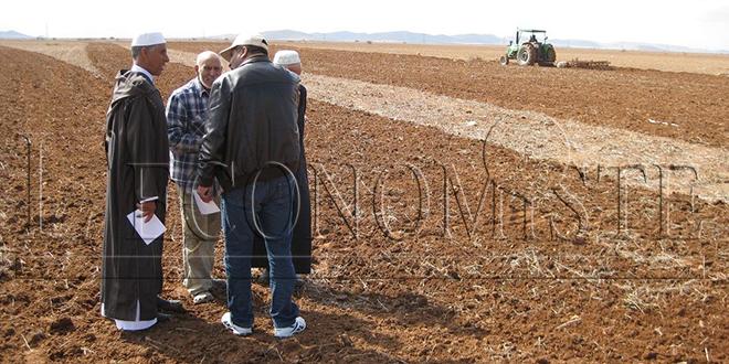 Agriculture solidaire: Coup de pouce de l'OCP à Rhamna