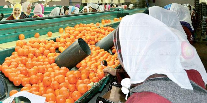 Produits agricoles: Akhannouch rassure sur l'export