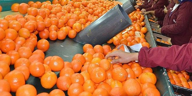 Agrumes: Le Maroc veut conquérir le marché japonais