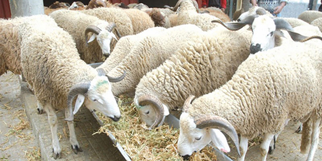 Covid19: Le premier marché pilote à bétail lancé