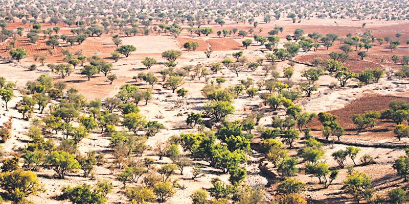 Tiznit: Plantation de 100 hectares d'arganiers