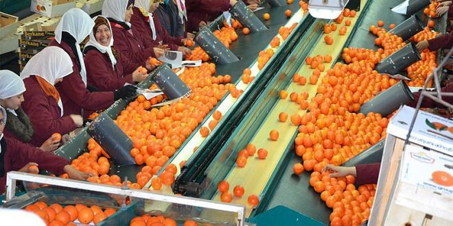 Berkane : Levée de la suspension provisoire d'exportation des agrumes.
