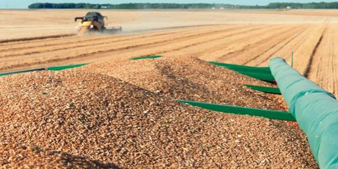 Qualité du blé: Le coup de gueule de la COMADER