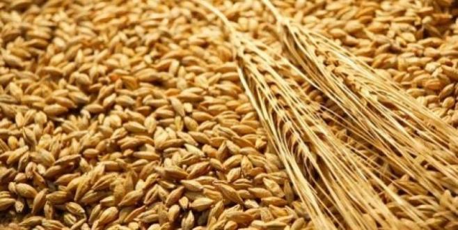 Stockage du blé : Les mesures du ministère de l'Agriculture