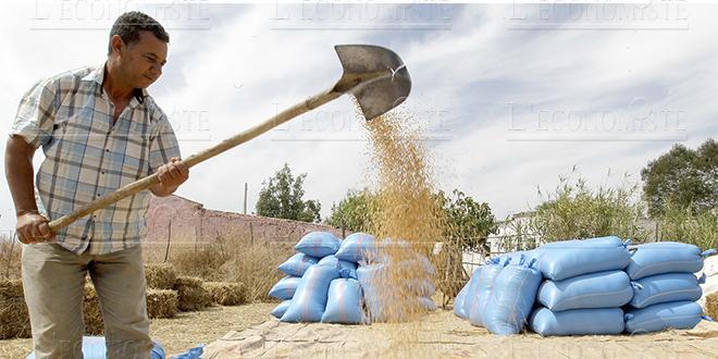 Oriental: Distribution de 146.000 quintaux d'orge subventionné