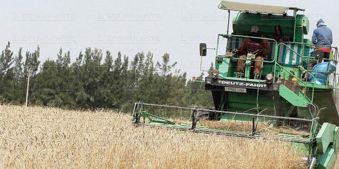 Campagne céréalière: Plus de 103 millions de quintaux attendus
