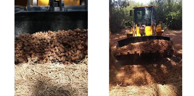 ONSSA: Destruction de 136 tonnes de pommes de terre à Berkane
