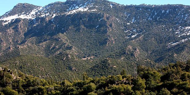 Froid : Les Eaux et forêts se mobilisent pour préserver le bois