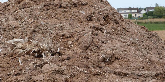Cheptel : L'ONSSA en guerre contre l'engraissement aux fientes de volailles