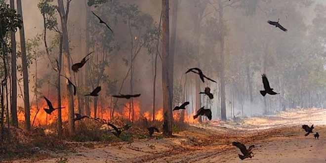 Australie: Plus de 270.000 ha de forêt ravagés par le feu