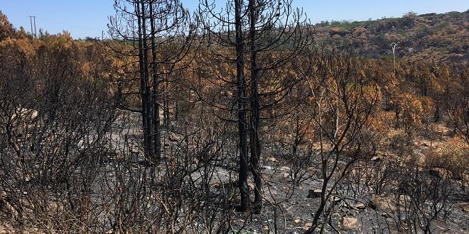Feu de forêt à Chefchaouen: 1.100 ha ravagés