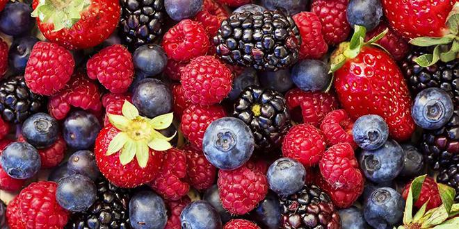 Fruits rouges : Les bons chiffres du Nord