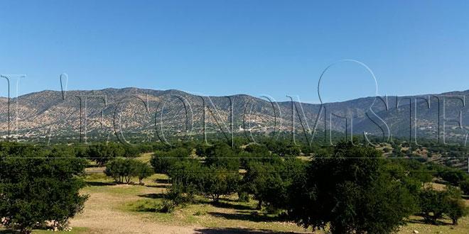 Plantation de 5.200ha à Taza