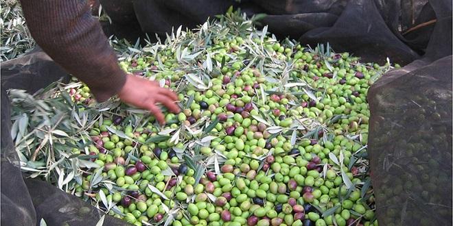 Dix unités de trituration d'olives fermées