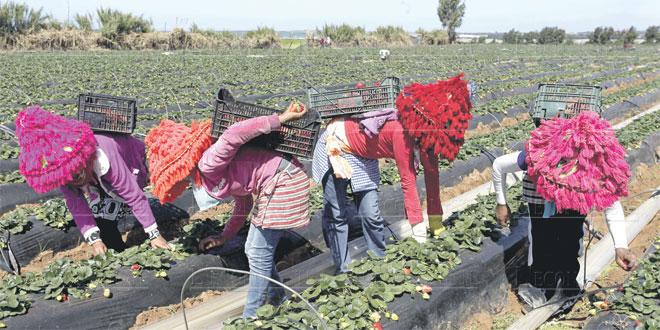 2.500 saisonnières marocaines restent en Espagne