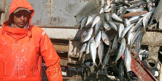 Pêche: Hausse de 35% de la valeur des débarquements