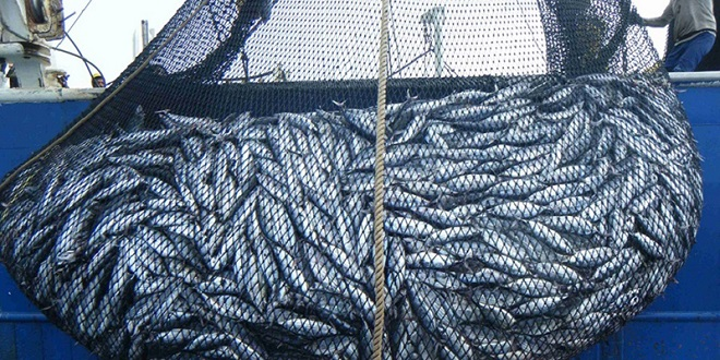 Pêche : Les Danois prospectent au Maroc