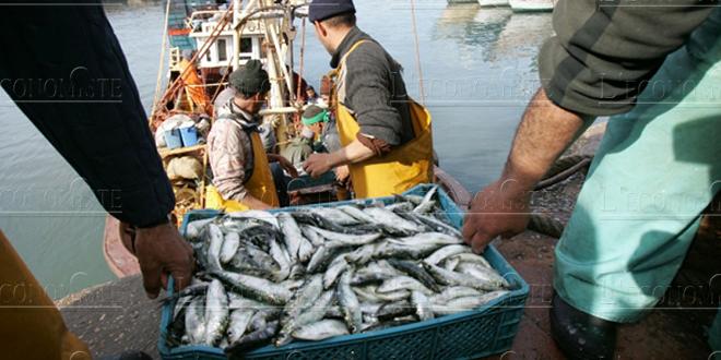 Pêche : Ce qu'a généré l'activité en 2017