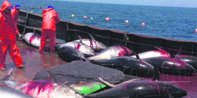 Pêche : Baisse de 13% des captures