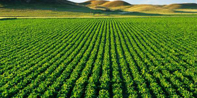 Agriculture : Le Maroc primé