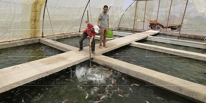Aliments pour poissons : Le quota fixé