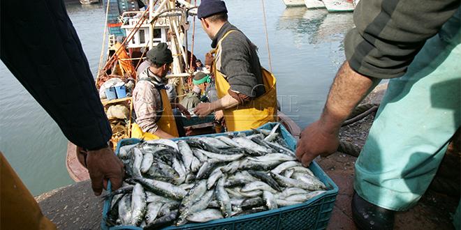 Pêche: Les débarquements reculent au 1er trimestre