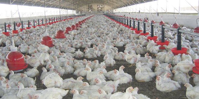 Aviculture: Le Maroc et le Rwanda scellent un accord