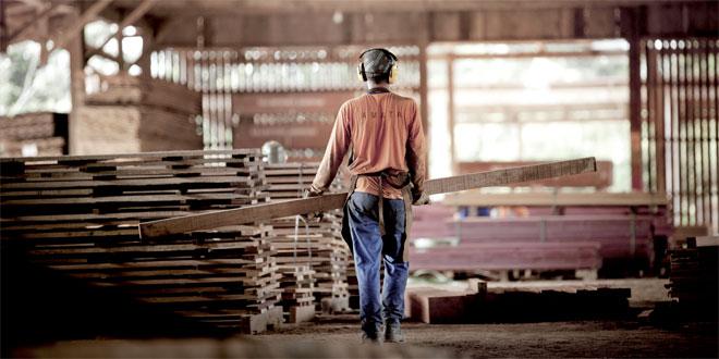 Reboiser l'Amazonie: Des entreprises relèvent le défi