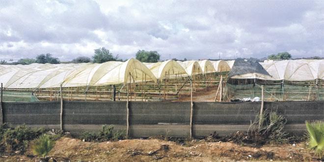 Au Maroc, la révolution de l'irrigation contre le réchauffement climatique