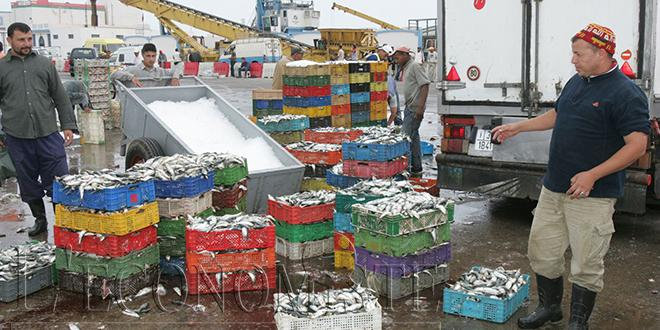 Pêche: 5,99 MMDH de débarquements à fin août