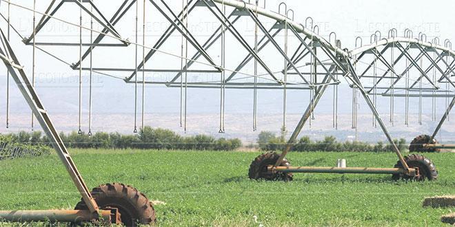 Marrakech/Agriculture: Les filières qui cartonnent