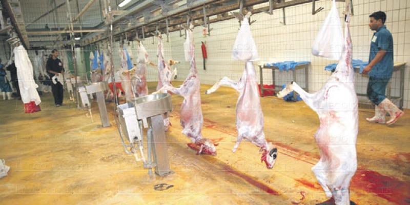 L'ONSSA met le doigt sur la catastrophe des abattoirs