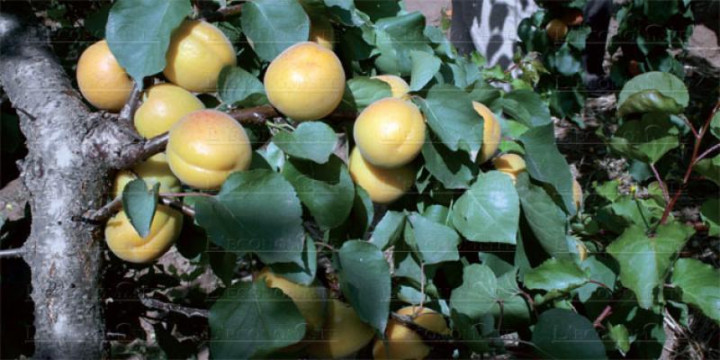 Produits végétaux transformés: La filière rame à opérer son intégration