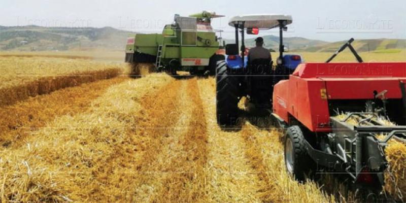 Dossier El Jadida - Agriculture: Peut mieux faire!