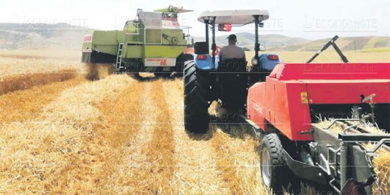 Taounate-Agriculture: Belle moisson pour le programme Al Moutmir