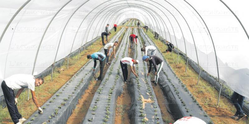 Agriculture bio: Comment bénéficier de l'aide à la certification