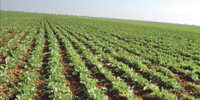 Le premier projet agricole intégré opérationnel