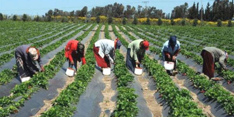 Casablanca-Settat Plus de 635.000 tonnes de légumes produits