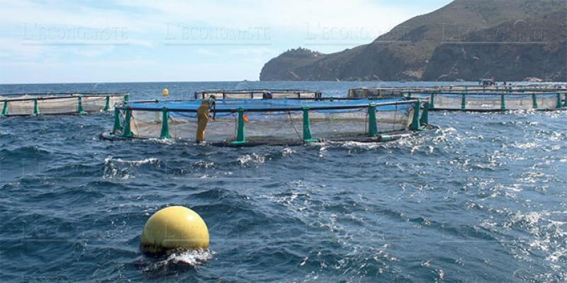 Une écloserie pour l'aquaculture en gestation dans le Nord