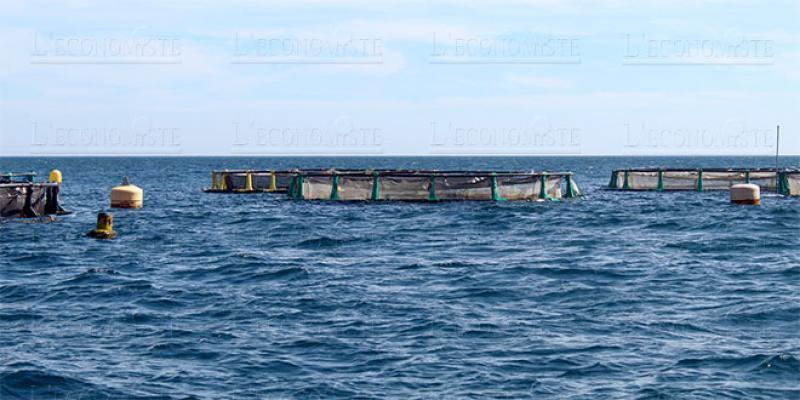 Tanger: Une écloserie pour l'aquaculture en projet