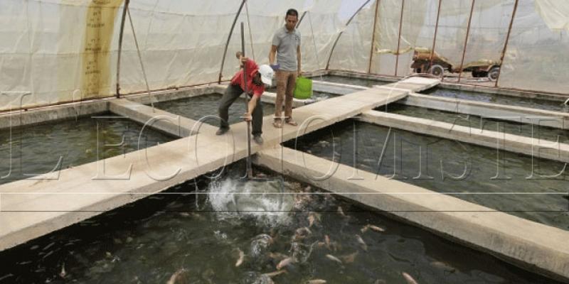 Aquaculture: L'objectif de 200.000 tonnes relégué aux calendes grecques!