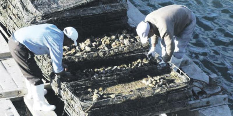 L'aquaculture à l'horizon 2020: Retard à l'allumage