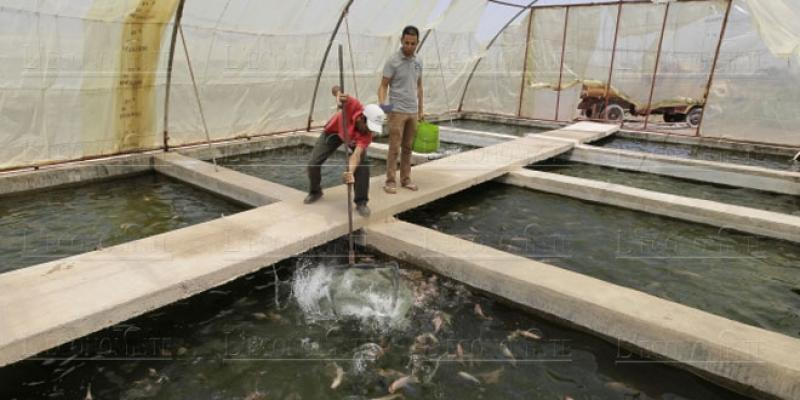 Souss Massa: Nouvel élan pour l'aquaculture