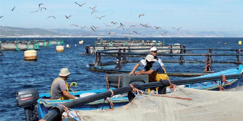 Aquaculture: Une loi pour encadrer le secteur
