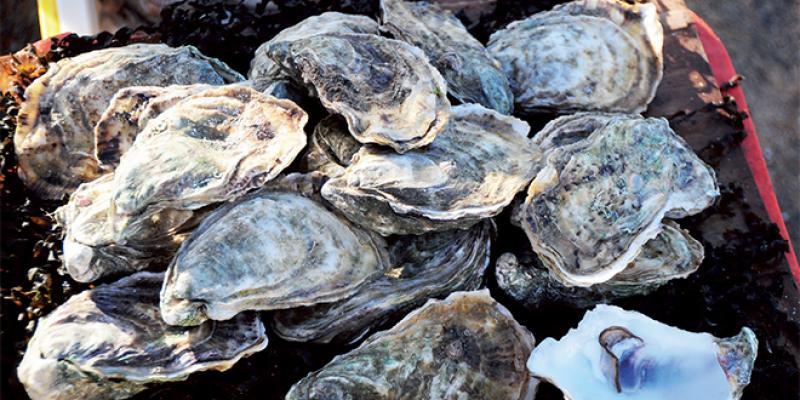 Aquaculture: Enfin le vrai démarrage
