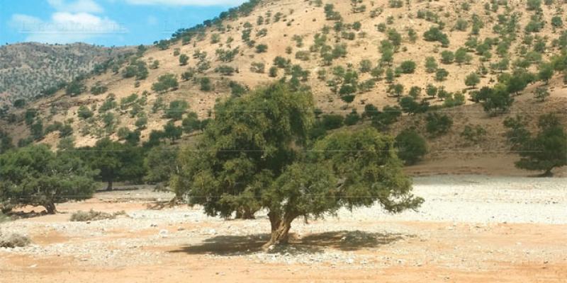 Arganier: Un congrès international à Agadir