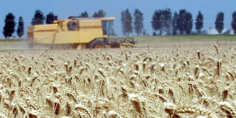 Béni Mellal-Khénifra: La campagne agricole largement avancée