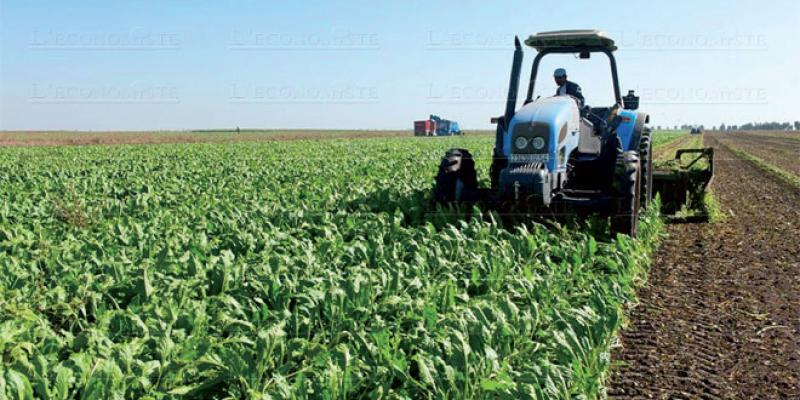Comment Sidi Bennour dynamise ses potentialités agricoles